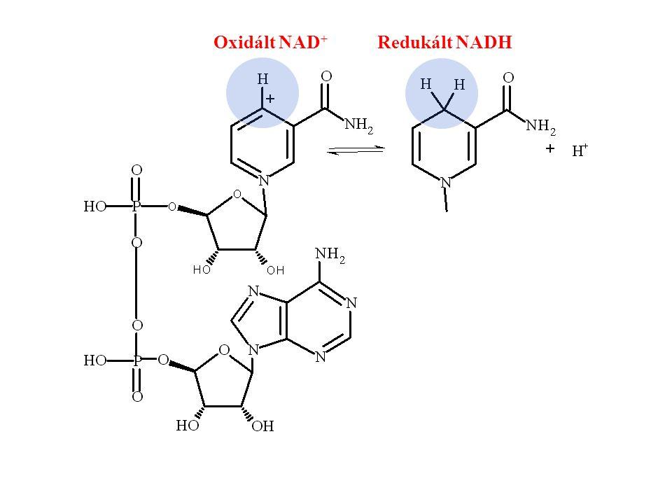 Oxidált NAD+ Redukált NADH