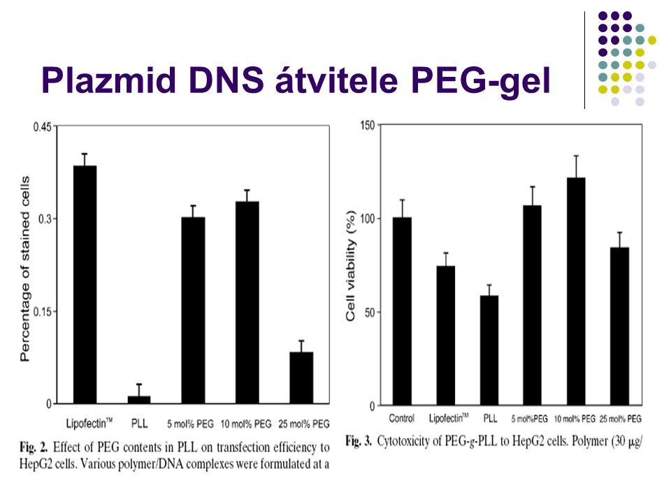 Plazmid DNS átvitele PEG-gel