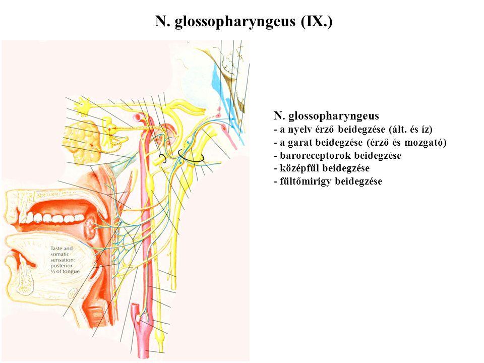 N. glossopharyngeus (IX.)