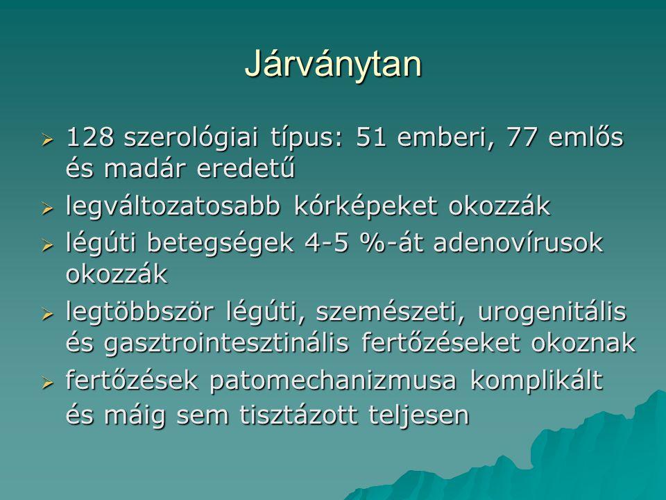 Járványtan 128 szerológiai típus: 51 emberi, 77 emlős és madár eredetű