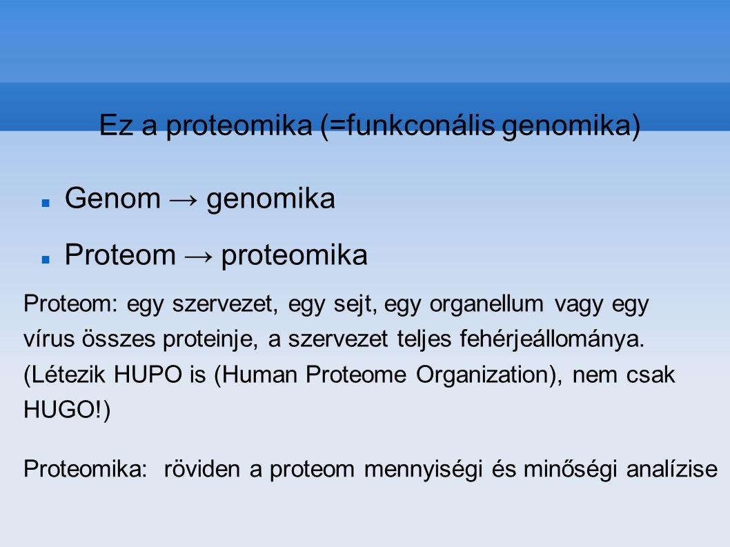 Ez a proteomika (=funkconális genomika)