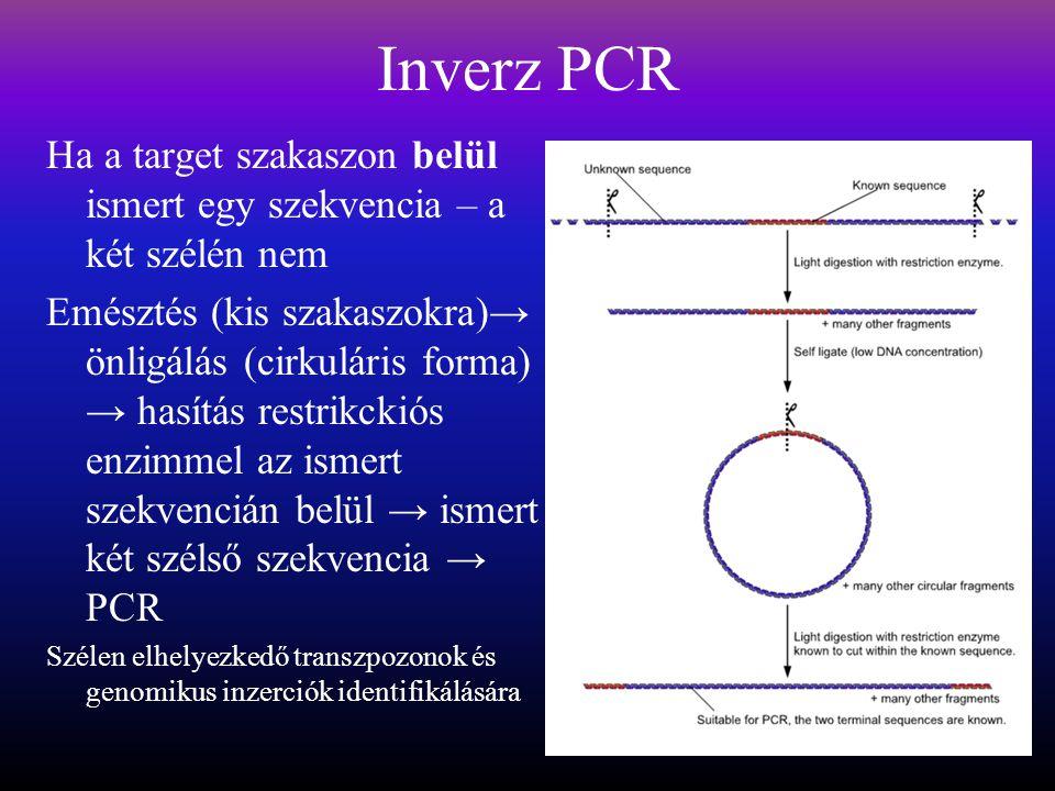Inverz PCR Ha a target szakaszon belül ismert egy szekvencia – a két szélén nem.