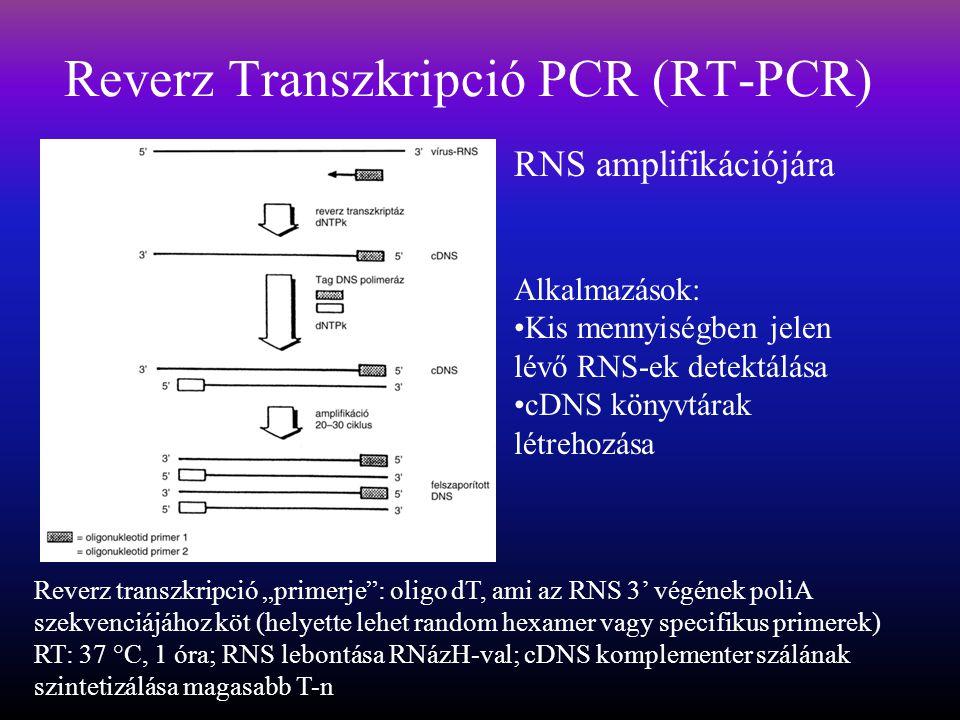 Reverz Transzkripció PCR (RT-PCR)