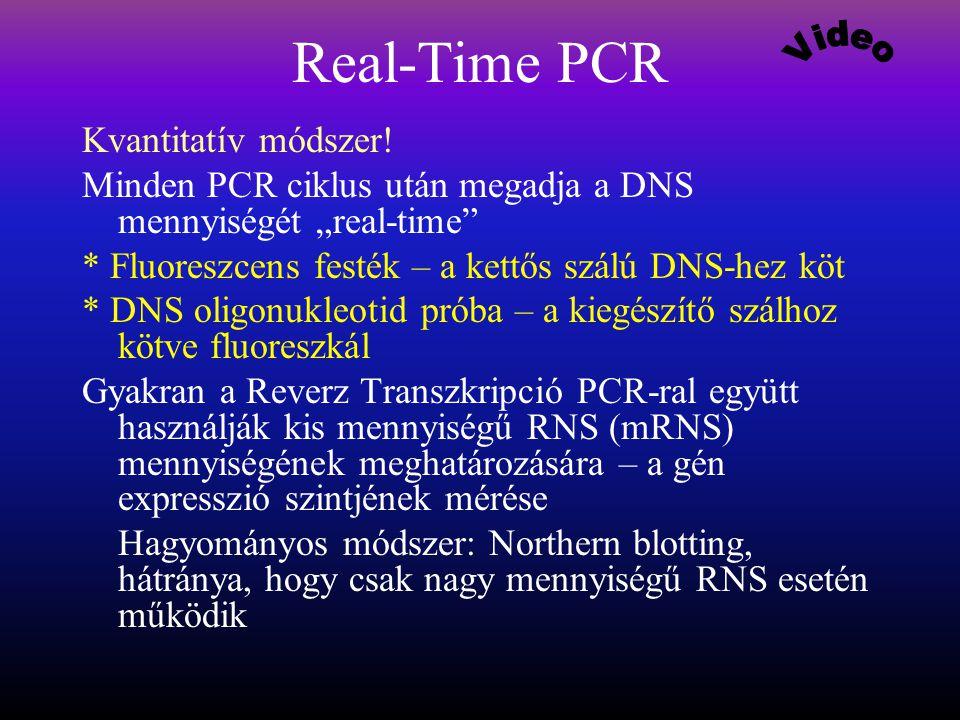 Real-Time PCR Video Kvantitatív módszer!