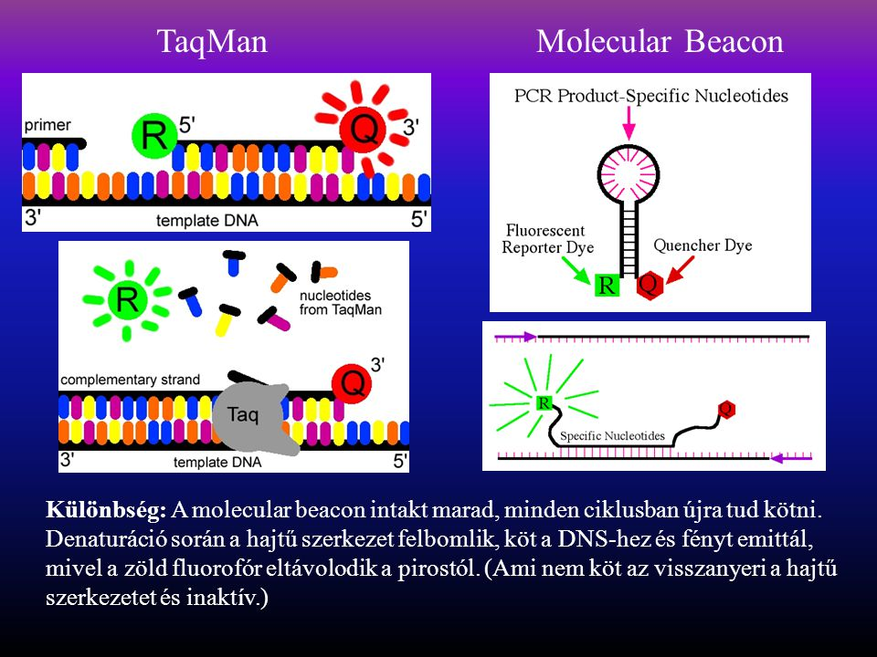 TaqMan Molecular Beacon