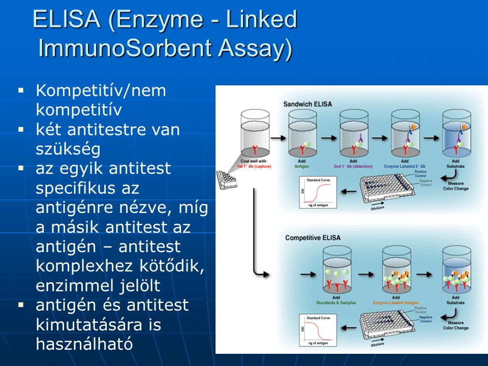 ELISA (Enzyme - Linked ImmunoSorbent Assay)