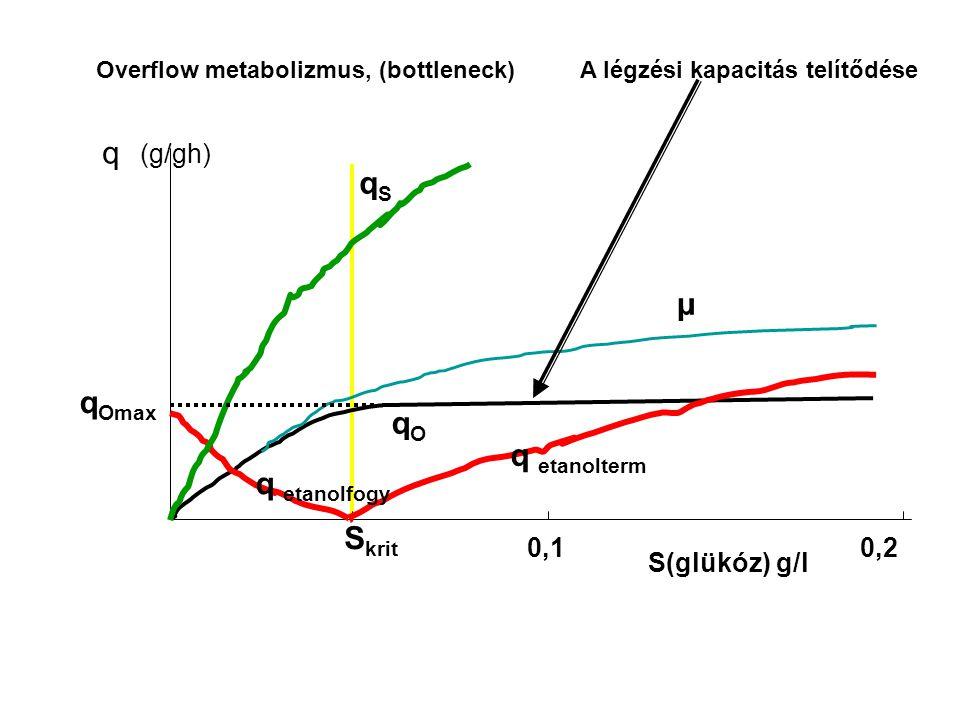q qS μ qOmax qO q etanolterm q etanolfogy Skrit 0,2 S(glükóz) g/l