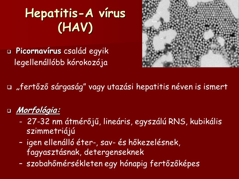 Hepatitis-A vírus (HAV)