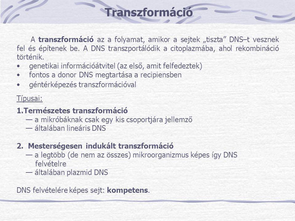 Transzformáció