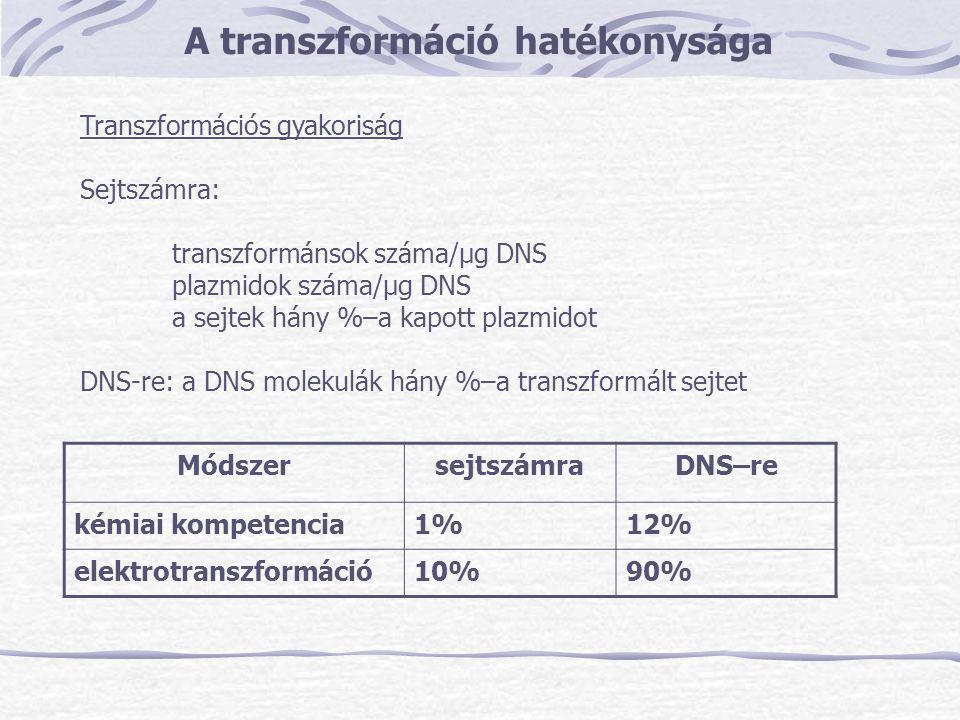 A transzformáció hatékonysága