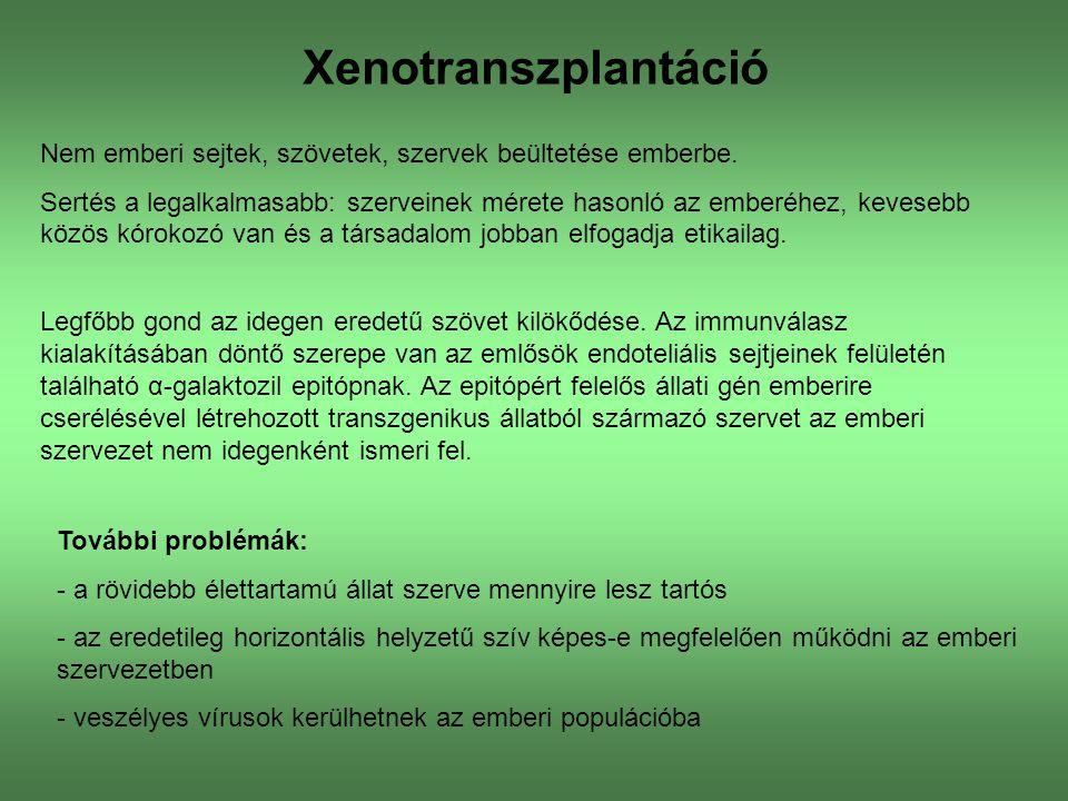 Xenotranszplantáció Nem emberi sejtek, szövetek, szervek beültetése emberbe.