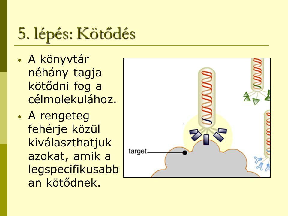 5. lépés: Kötődés A könyvtár néhány tagja kötődni fog a célmolekulához.