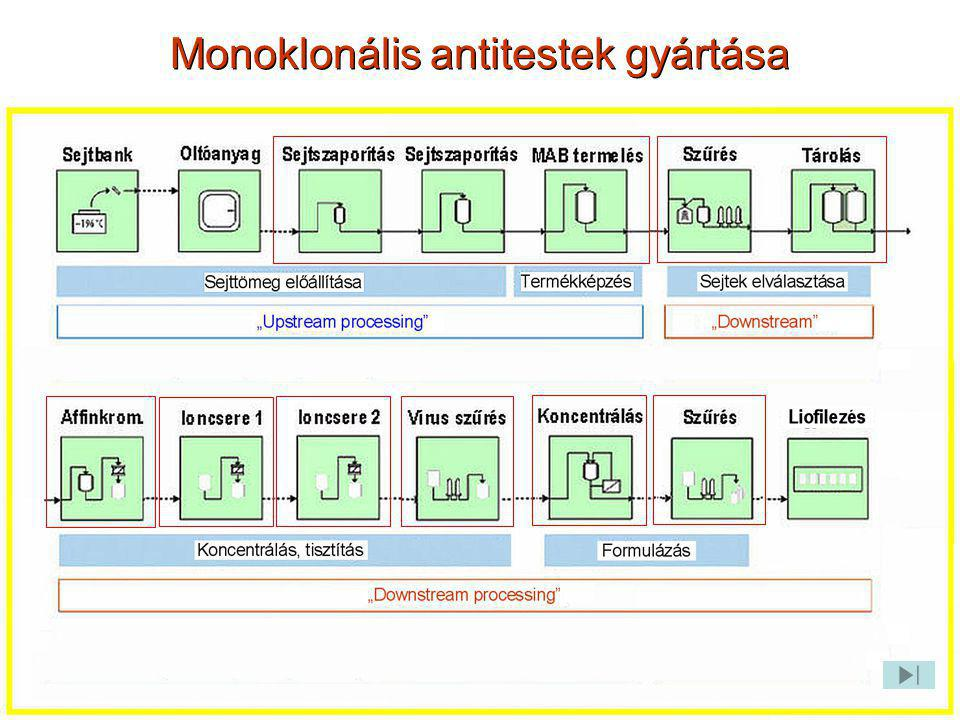 Monoklonális antitestek gyártása