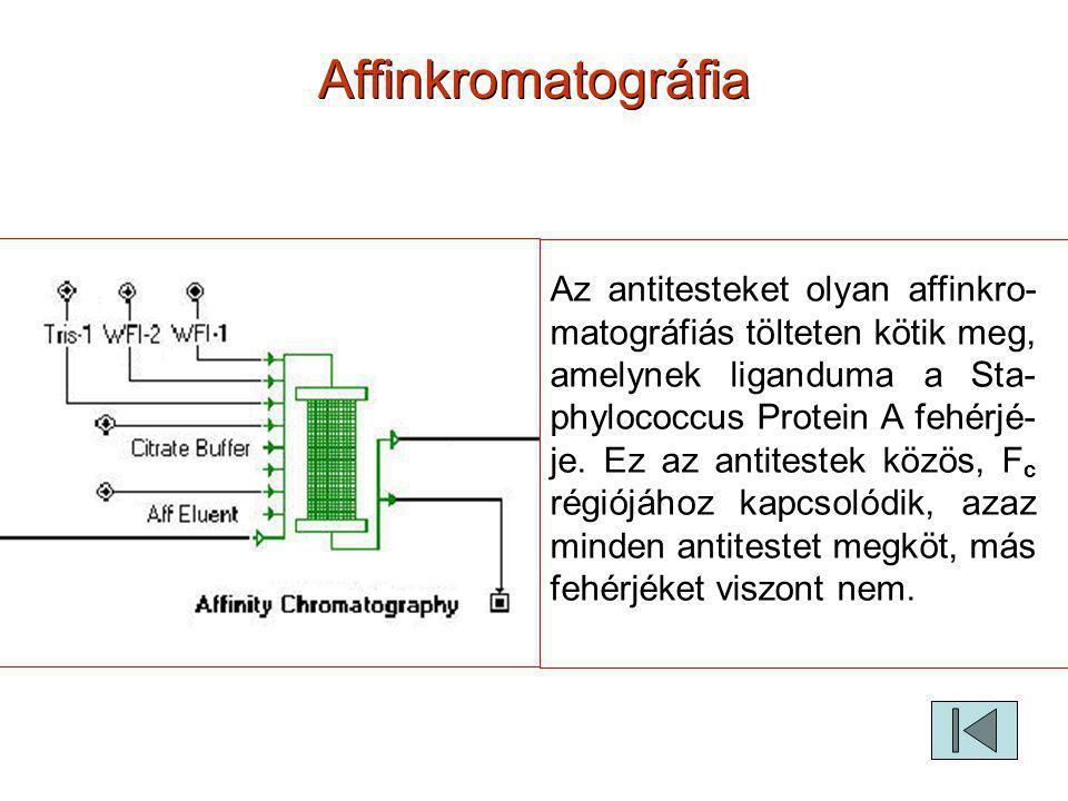 Affinkromatográfia