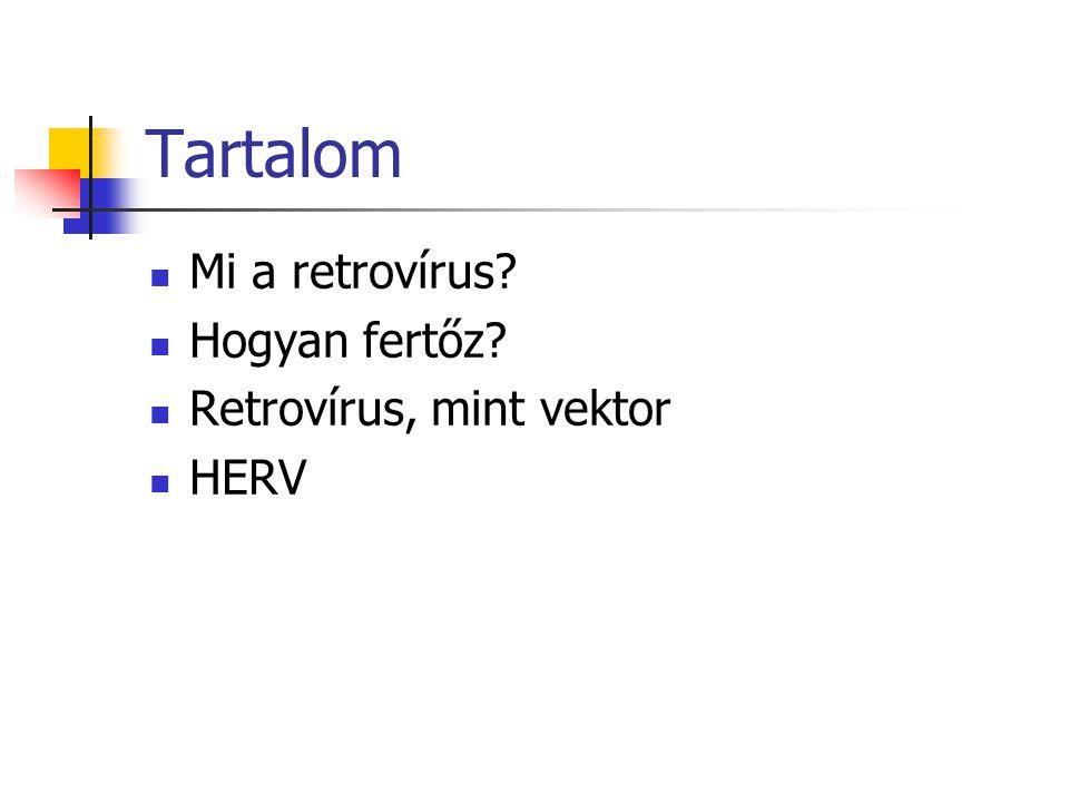 Tartalom Mi a retrovírus Hogyan fertőz Retrovírus, mint vektor HERV
