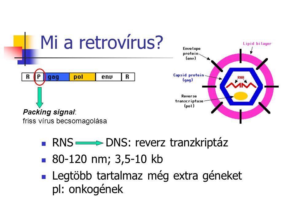 Mi a retrovírus RNS DNS: reverz tranzkriptáz 80-120 nm; 3,5-10 kb