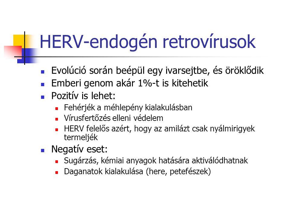 HERV-endogén retrovírusok