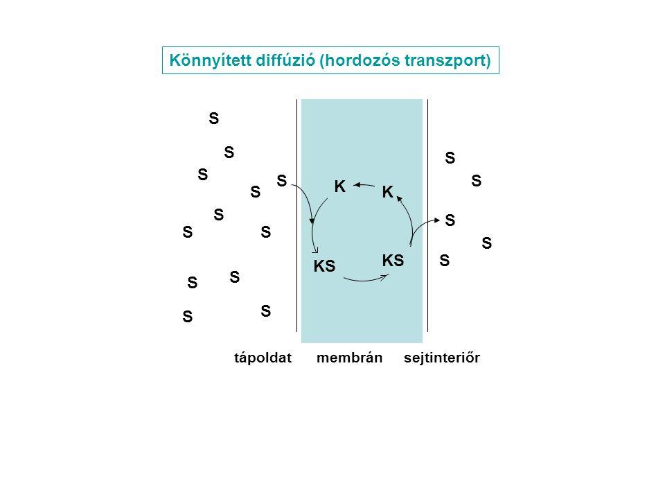 Könnyített diffúzió (hordozós transzport)
