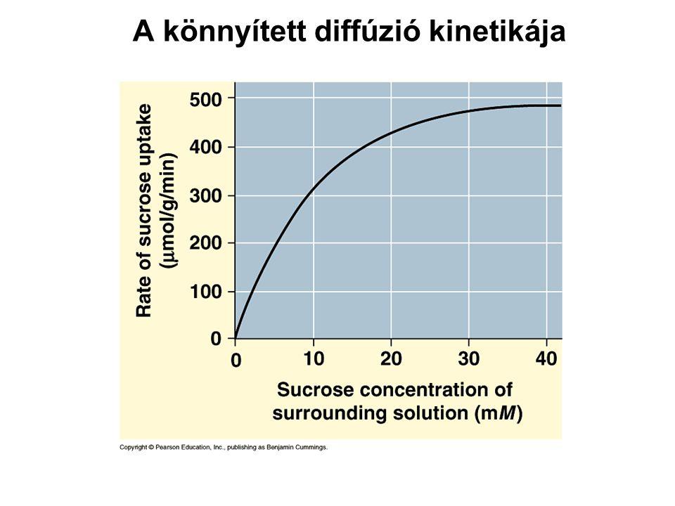 A könnyített diffúzió kinetikája