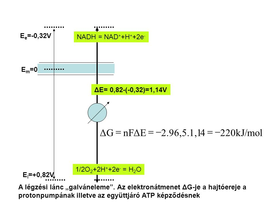 220kJ/mol 4 2.96,5.1,1 nF ΔE ΔG - = Ee=-0,32V NADH = NAD++H++2e- Em=0