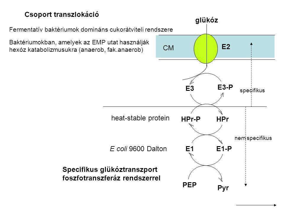 Csoport transzlokáció