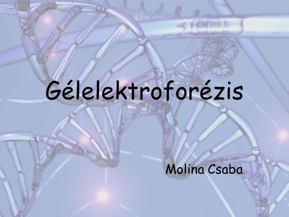 Gélelektroforézis Molina Csaba