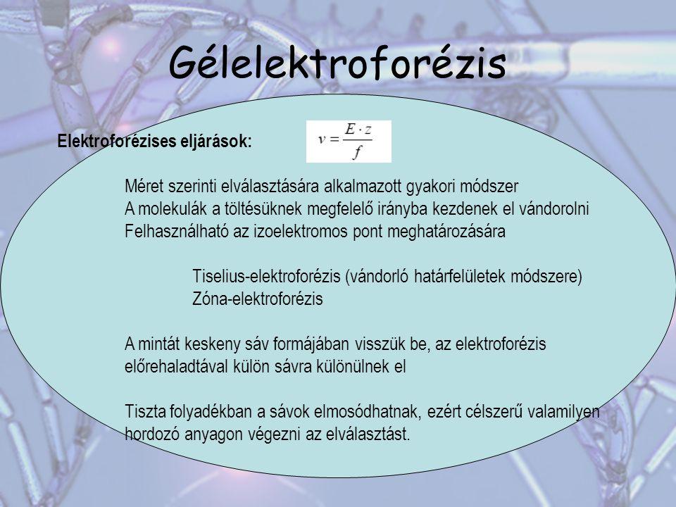 Gélelektroforézis Elektroforézises eljárások: