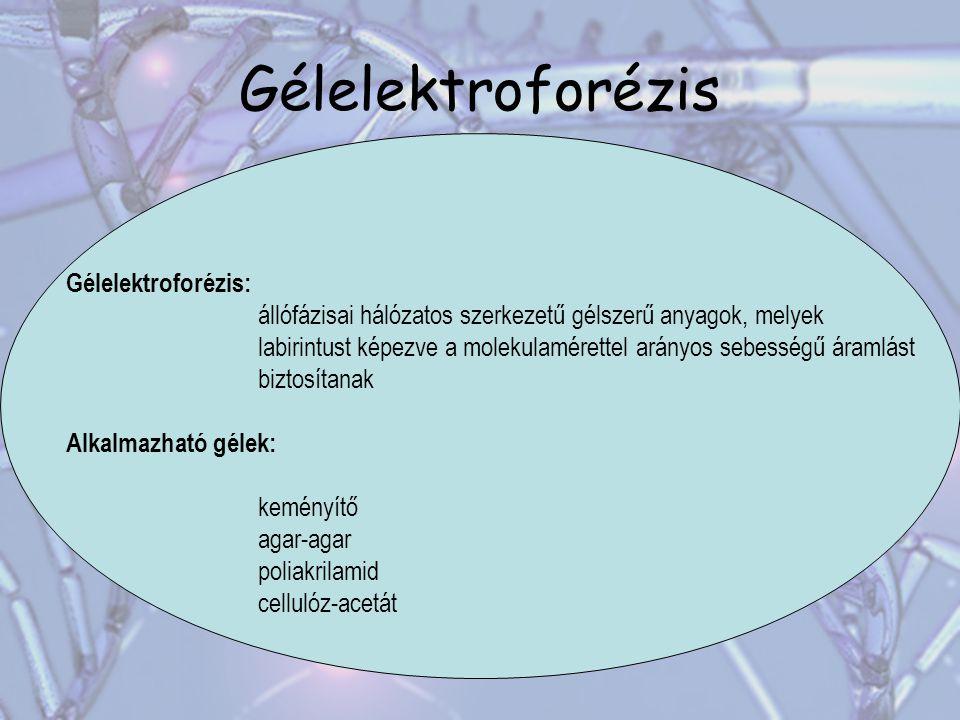 Gélelektroforézis Gélelektroforézis: