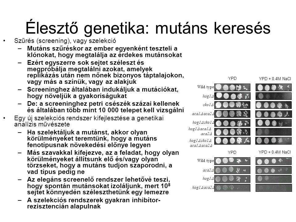 Élesztő genetika: mutáns keresés