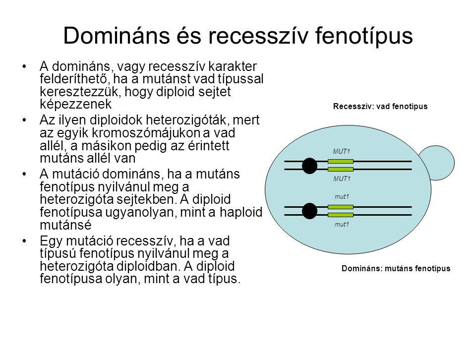 Domináns és recesszív fenotípus