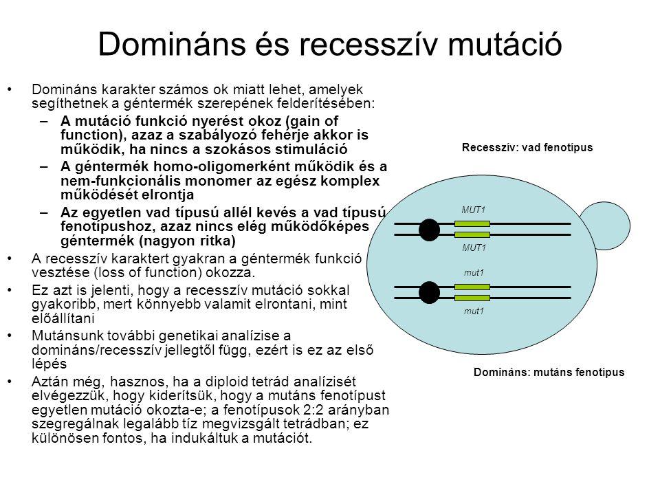 Domináns és recesszív mutáció