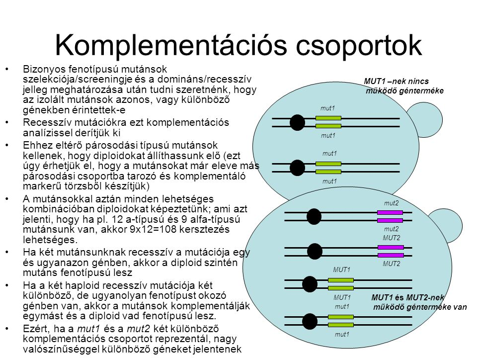 Komplementációs csoportok