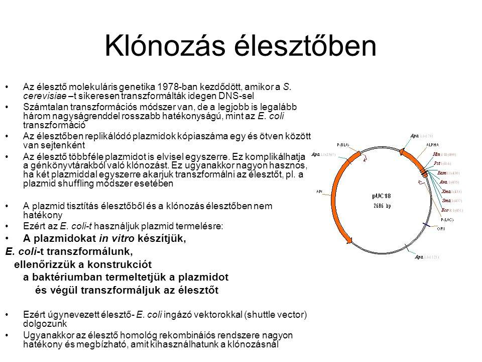 Klónozás élesztőben A plazmidokat in vitro készítjük,