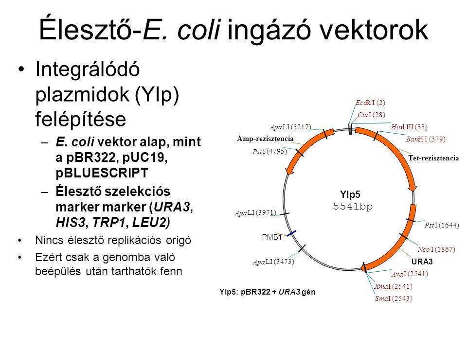Élesztő-E. coli ingázó vektorok