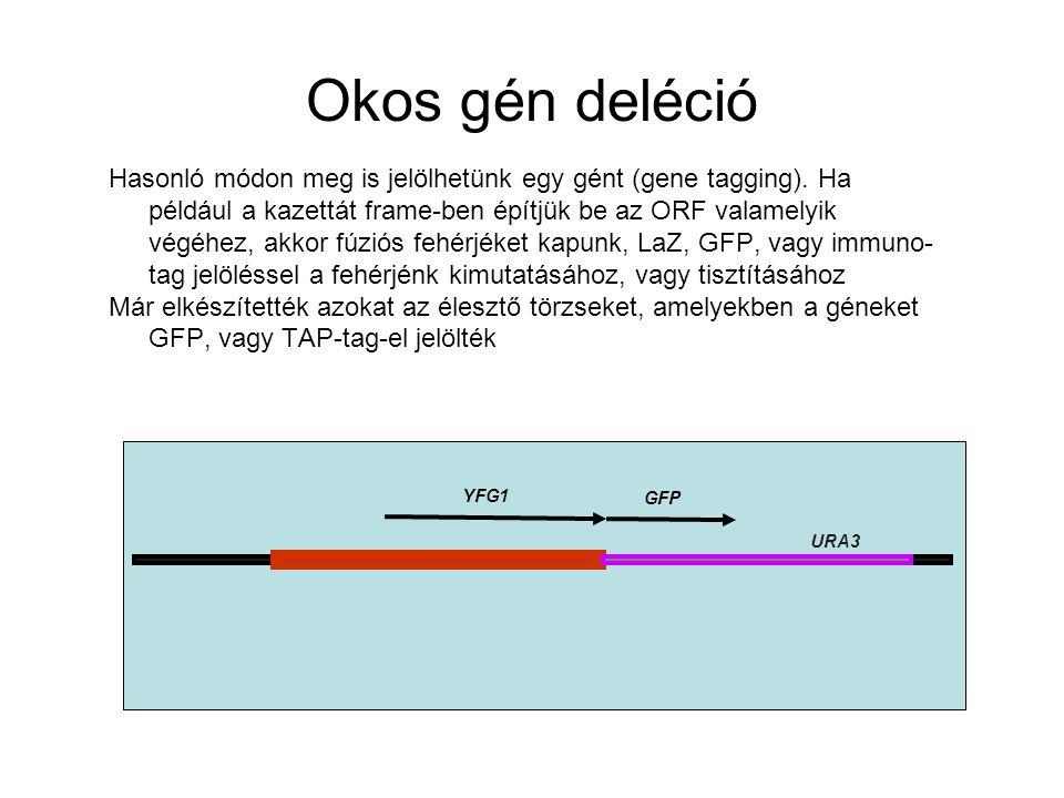 Okos gén deléció