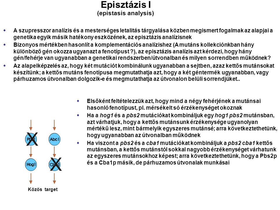 X Episztázis I (epistasis analysis)