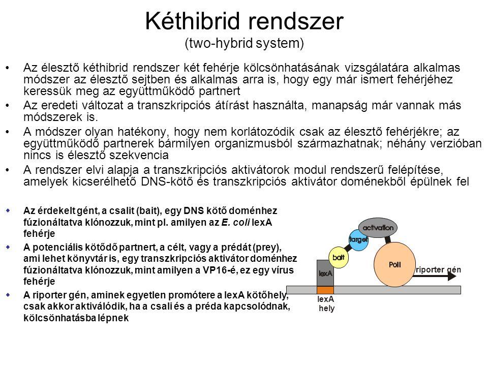 Kéthibrid rendszer (two-hybrid system)