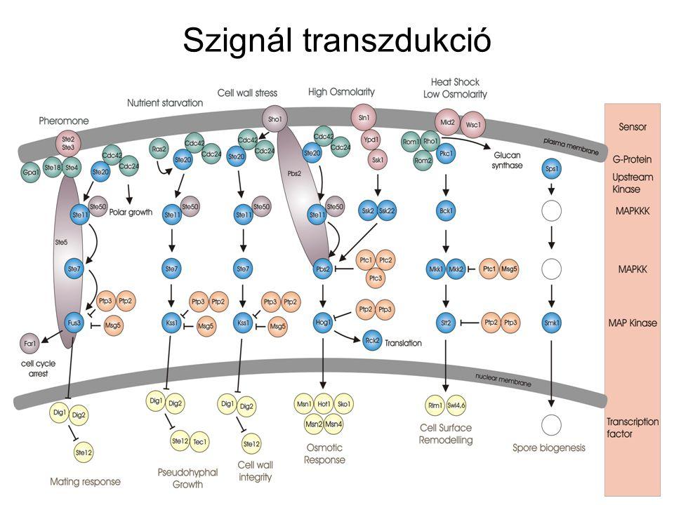 Szignál transzdukció