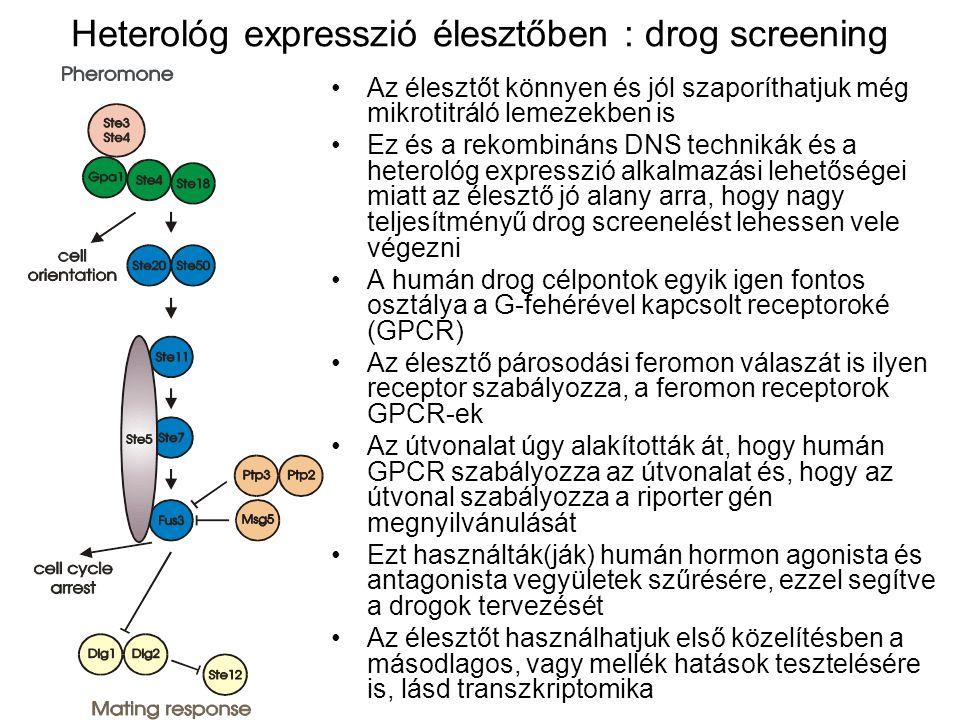 Heterológ expresszió élesztőben : drog screening