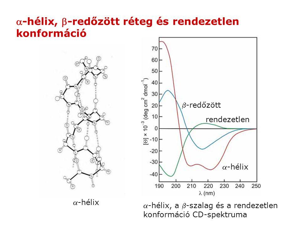 a-hélix, b-redőzött réteg és rendezetlen konformáció