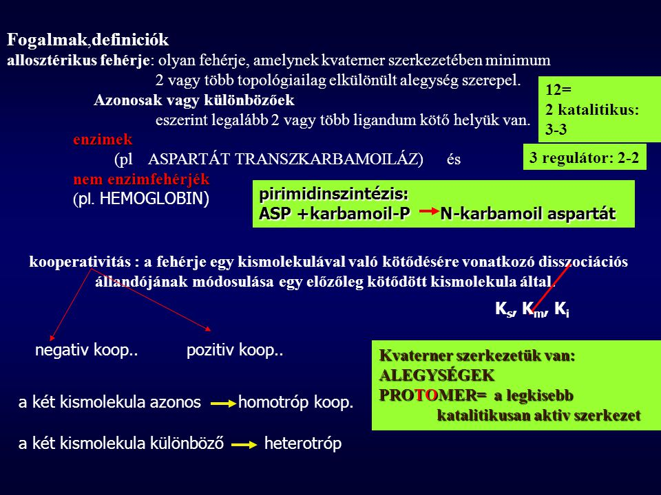 Fogalmak,definiciók allosztérikus fehérje: olyan fehérje, amelynek kvaterner szerkezetében minimum.