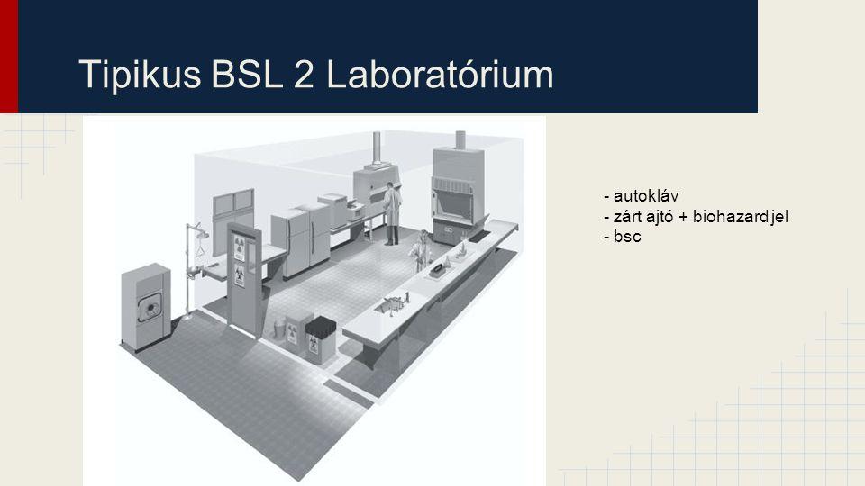 Tipikus BSL 2 Laboratórium
