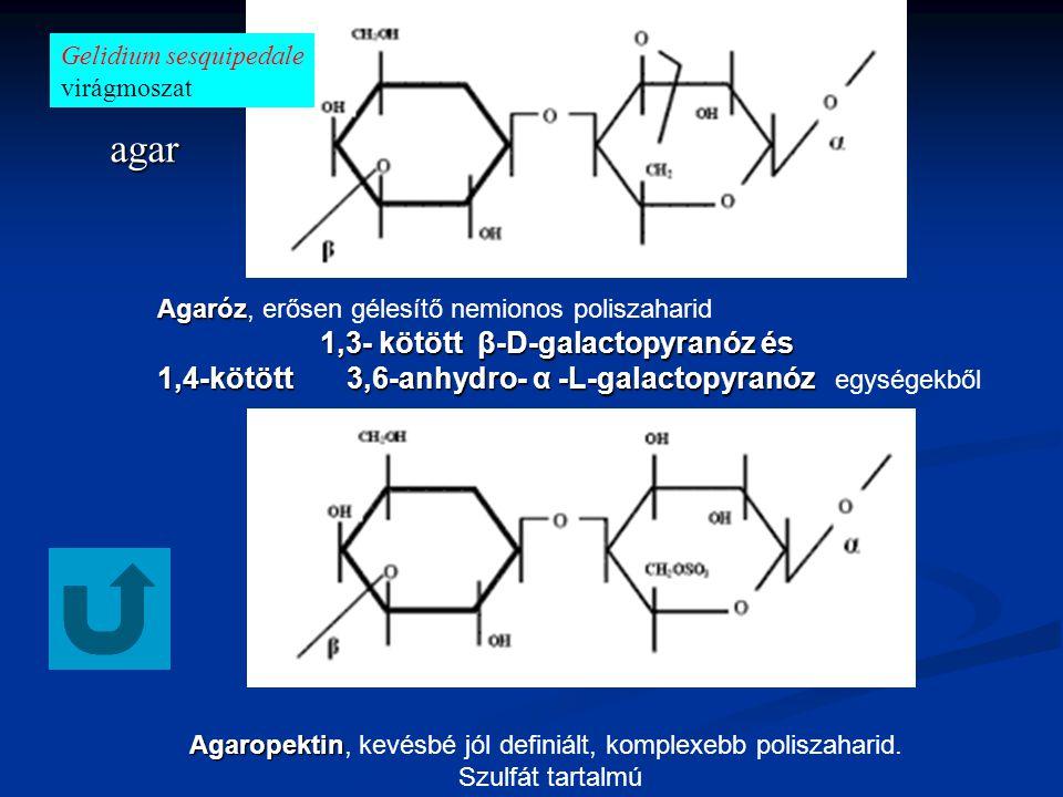 Agaropektin, kevésbé jól definiált, komplexebb poliszaharid.