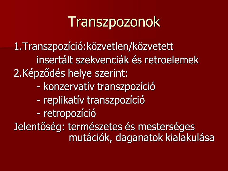 Transzpozonok 1.Transzpozíció:közvetlen/közvetett