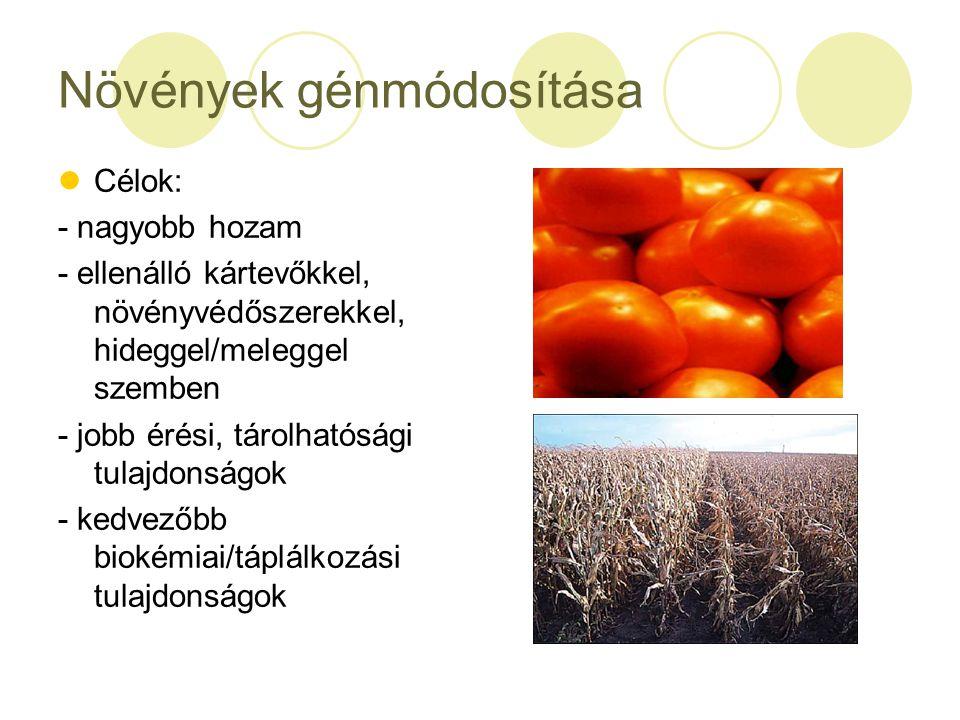 Növények génmódosítása