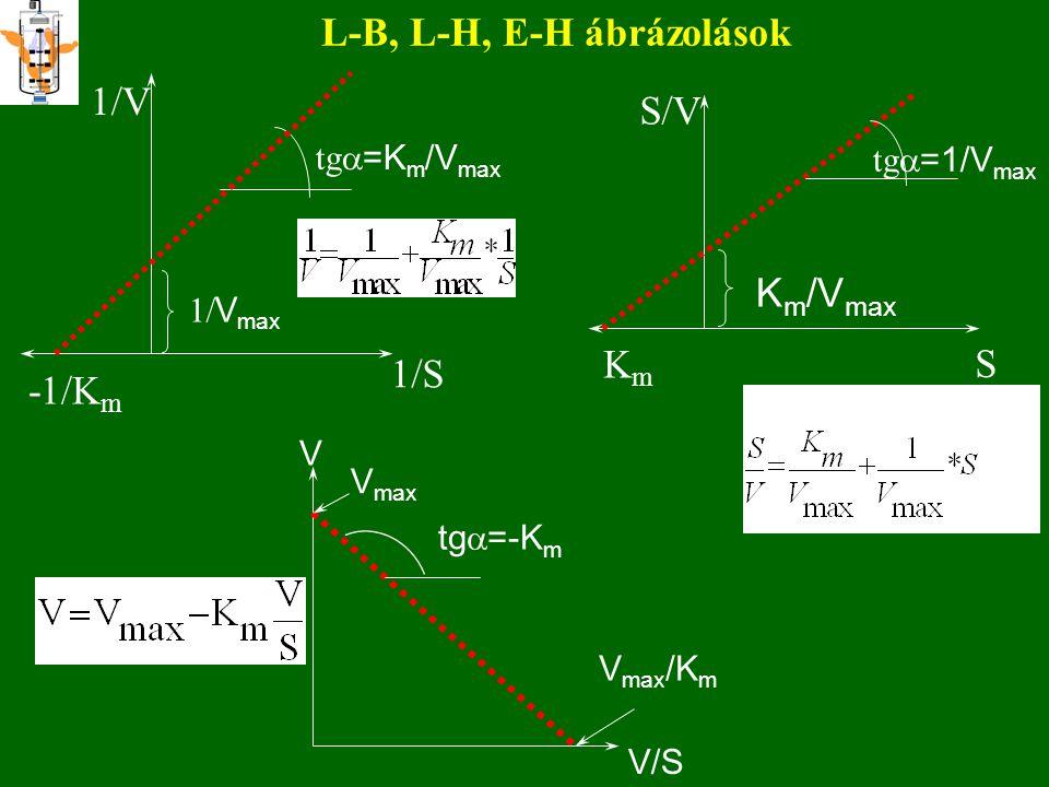 L-B, L-H, E-H ábrázolások