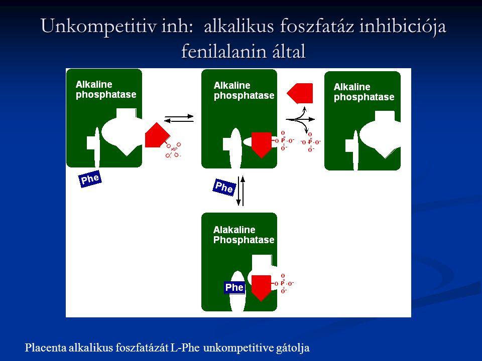 Unkompetitiv inh: alkalikus foszfatáz inhibiciója fenilalanin által