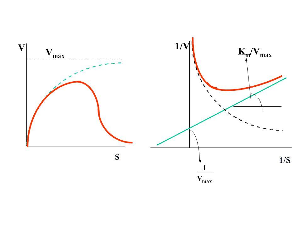 V max 1 K m /V S 1/S 1/V