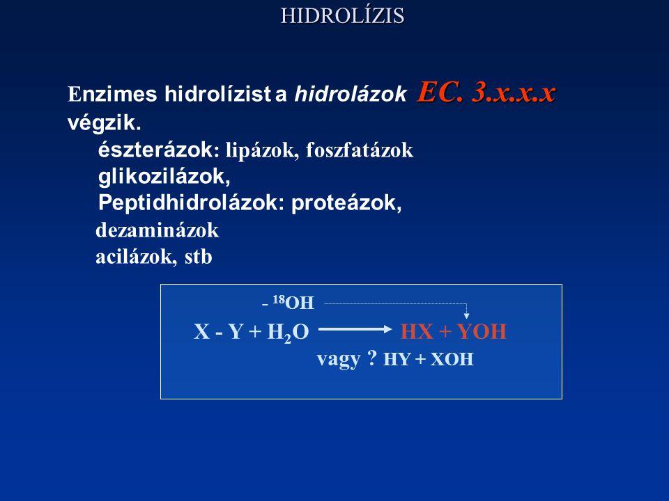 Enzimes hidrolízist a hidrolázok EC. 3.x.x.x végzik.