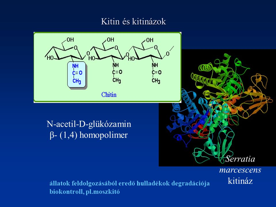 N-acetil-D-glükózamin β- (1,4) homopolimer